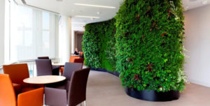 Office plant walls